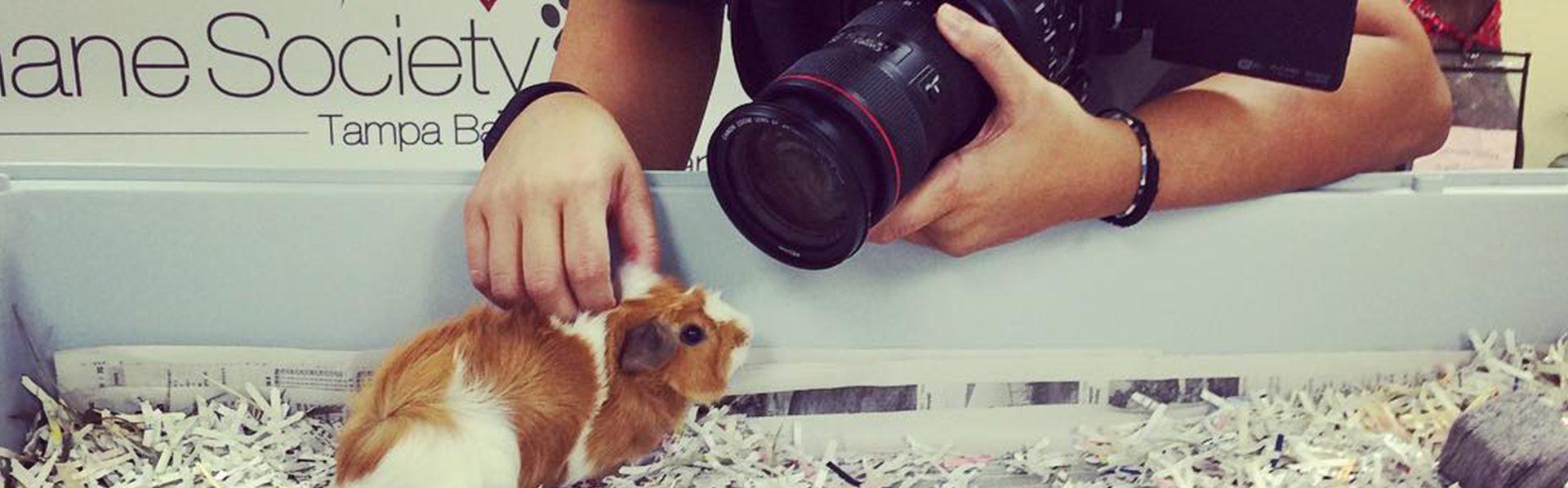 Humane Society photo shoot Schifino Lee Tampa, Florida